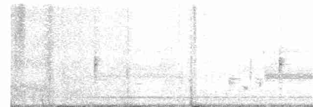 Trumpeter Swan - Kevin McGann