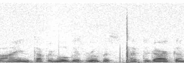 Small-billed Tinamou - William Belton