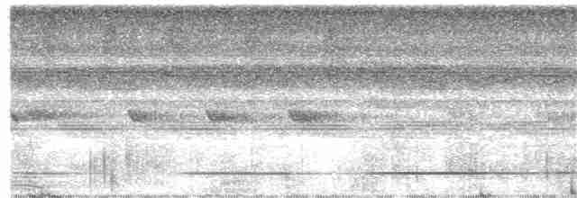Great Tinamou - William Hemstrom