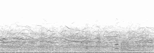 Coscoroba Swan - Nelson  Contardo