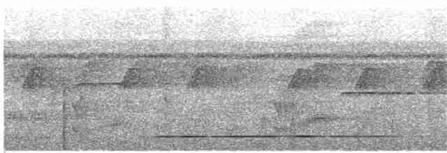 White-throated Tinamou - Nick Athanas
