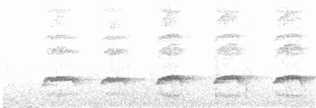 Little Spotted Kiwi - Nicholas Talbot