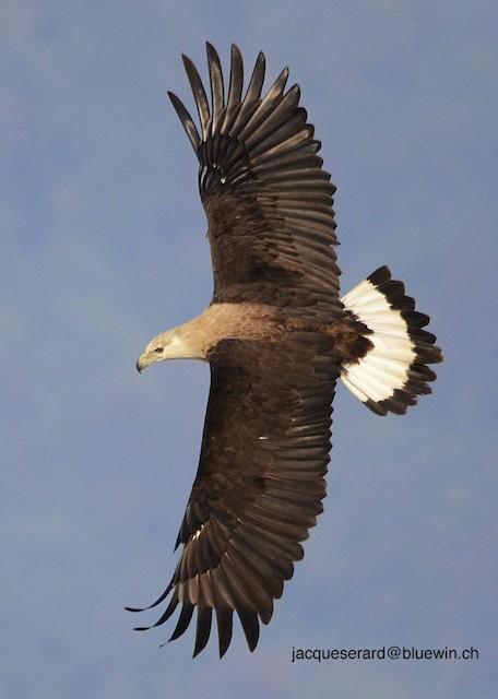 Uttarakhand - Jim Corbett Wildlife Sanctuary