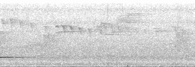 Thicket Tinamou (cinnamomeus Group) - David L. Ross, Jr.