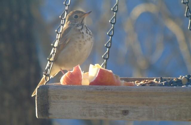 Great Backyard Bird Count Checklist - 15 Feb 2020 - My ...