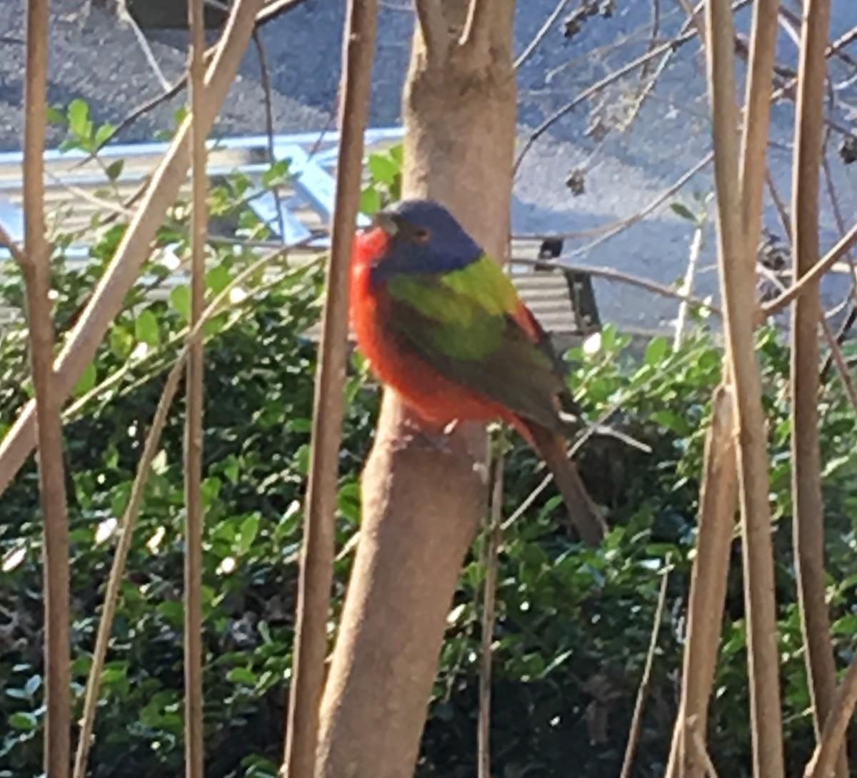 Great Backyard Bird Count Checklist - 17 Feb 2020 - Lewes ...