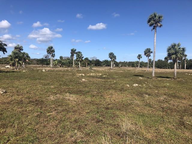 Exemplar palm habitat: Matanzas, Cuba.