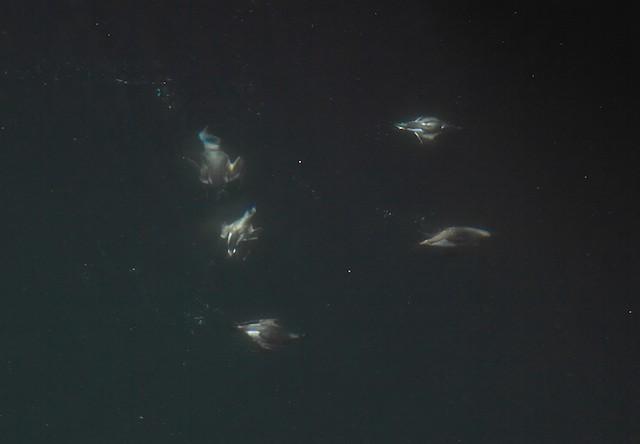 Birds underwater.