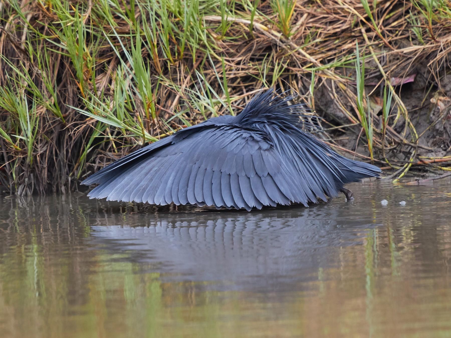 Black Heron - Magnus Grylle