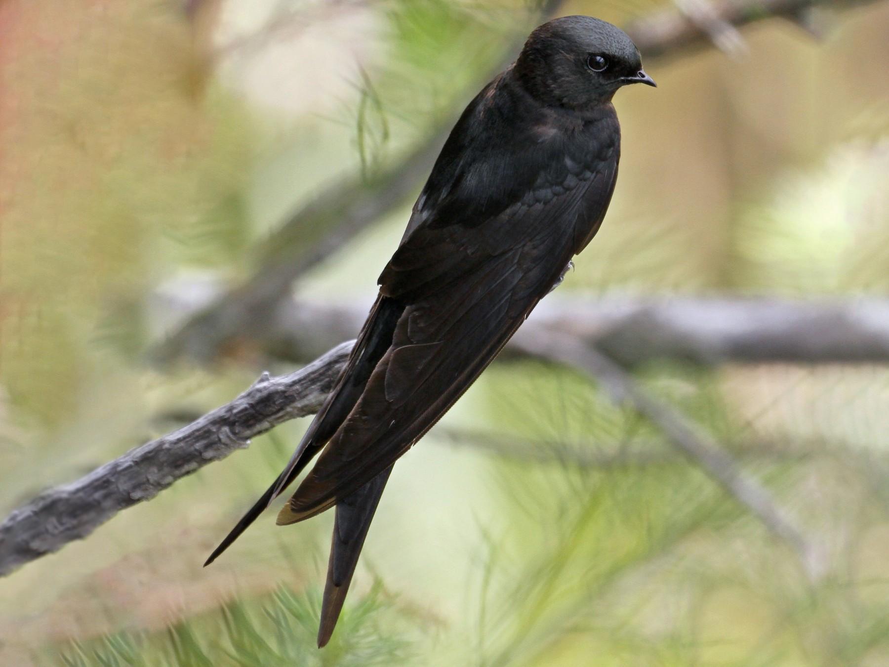 Black Sawwing - Marna Buys