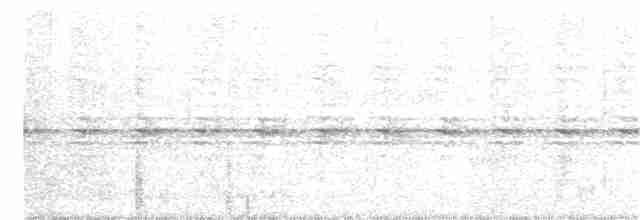 Cinereous Tinamou - Marcelo Barbosa     - TO Birding
