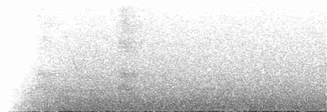Little Tinamou - Daniel Lane