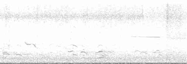 Cackling Goose - Neill Vanhinsberg
