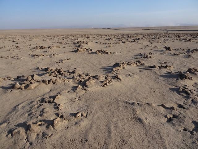 Example breeding habitat.