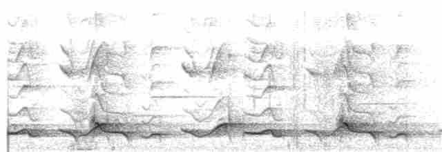 Spotted Wood-Quail - Graham Gerdeman