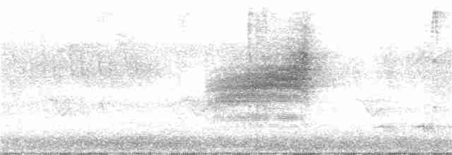 Swainson's Thrush (Russet-backed)