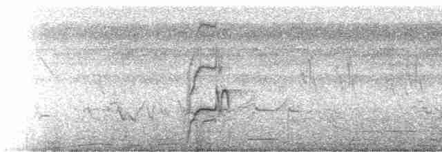 Undulated Tinamou - Niels Krabbe