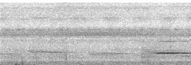 Cinereous Tinamou - Niels Krabbe