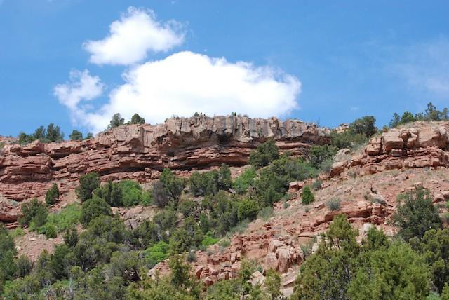Nesting habitat in Utah, United States.