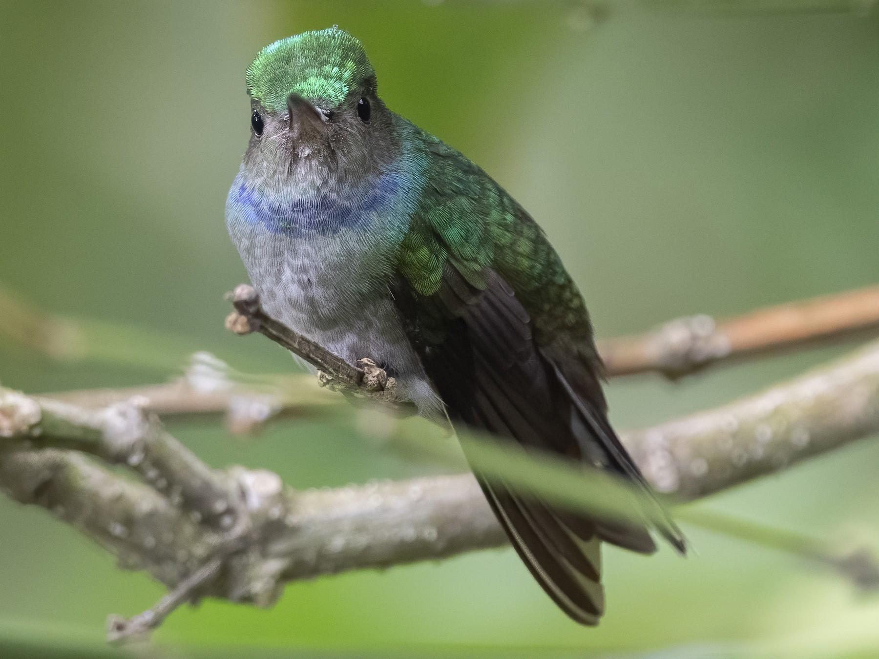 Charming Hummingbird - Peter Hawrylyshyn