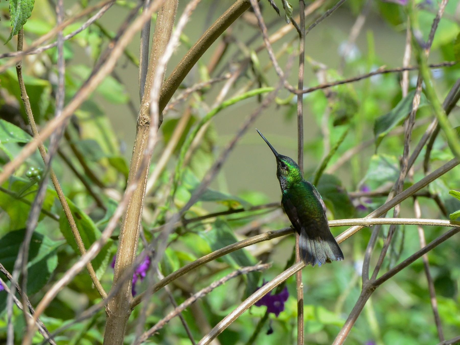 Charming Hummingbird - Erik Martin