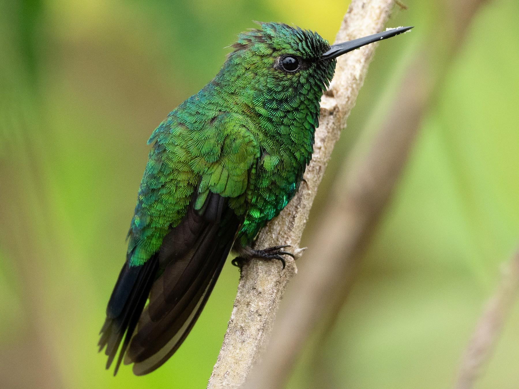 Garden Emerald - Jan Allen