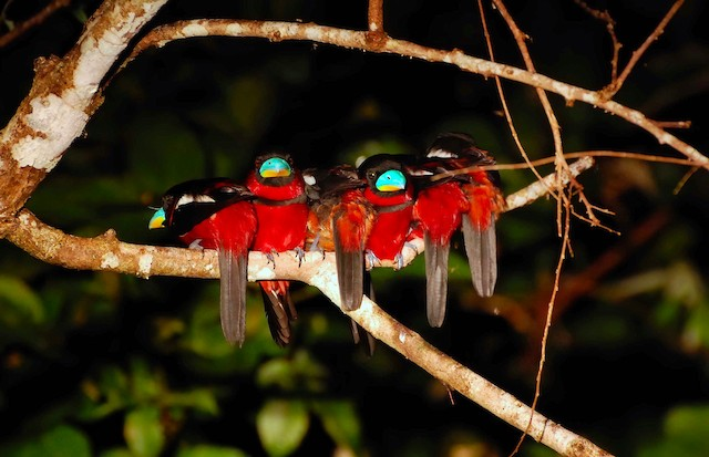Group perched together.