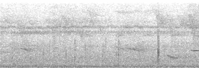 Little Tinamou - Niels Krabbe