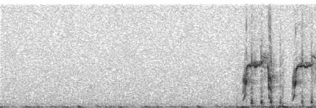 Ornate Tinamou - Niels Krabbe
