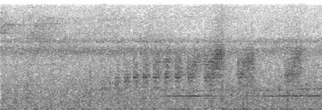 Great Tinamou - Niels Krabbe