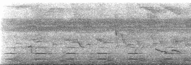 Crested Guan - Tom Schulenberg