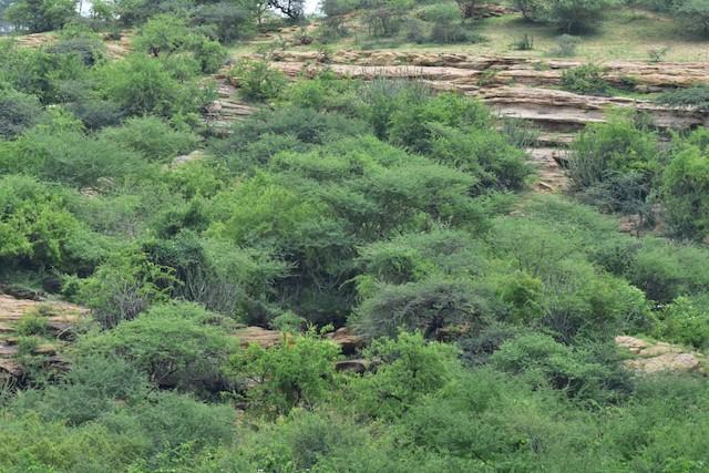 Example of thorn scrub habitat.