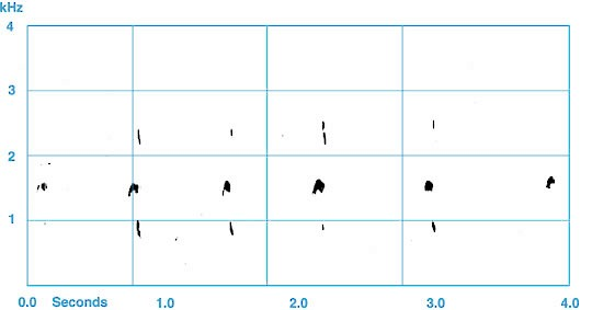 Figure 2. Flight calls of an adult Golden Eagle.