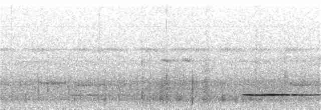Solitary Tinamou - Ciro Albano
