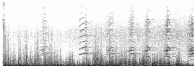 Cackling Goose (minima) - Ryan Zucker