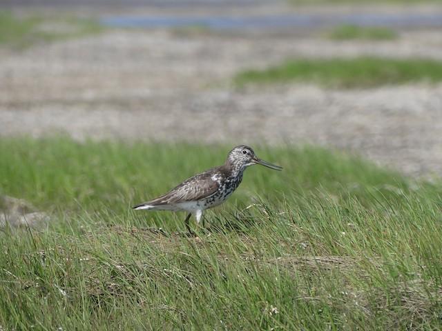 Adult near a brood.