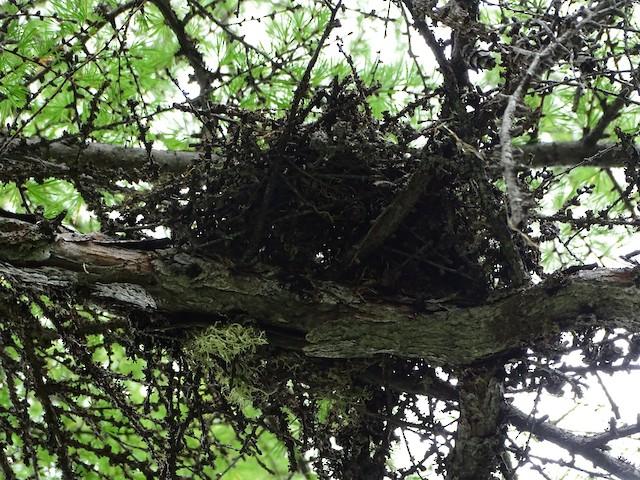 Nest from below.