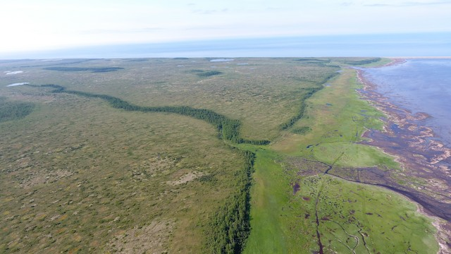 Drone image of the Habitats of Schaste Bay: inland larch forests, inland bog, riparian forest band, coastal meadow, intertidal flat, and Sea of Okhotsk coast.