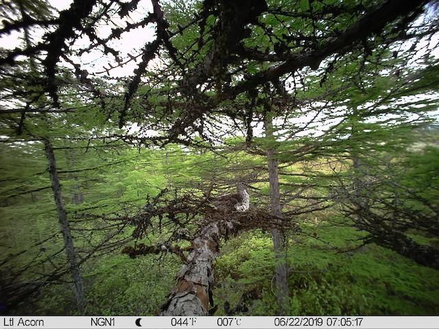 Adult incubating nest.