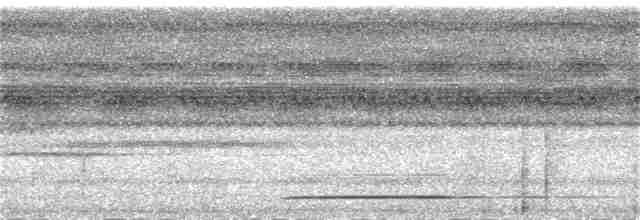 White-throated Tinamou - Rose Ann Rowlett