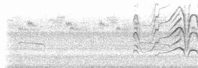 Black-bellied Whistling-Duck (fulgens) - Jay McGowan