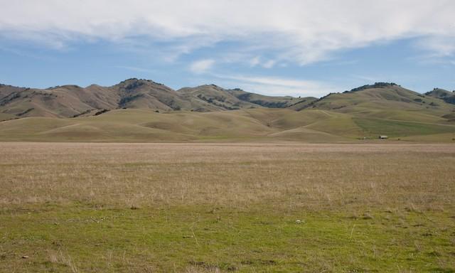 Typical winter habitat in central California