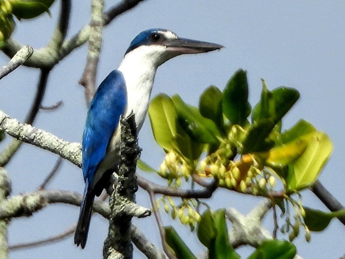 Beach Kingfisher - Warren Regelmann