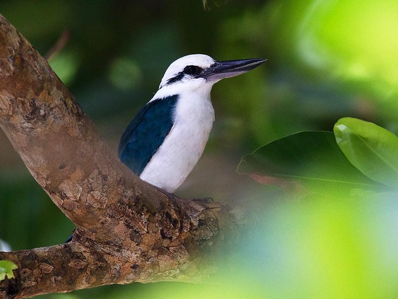 Beach Kingfisher - Tony Palliser