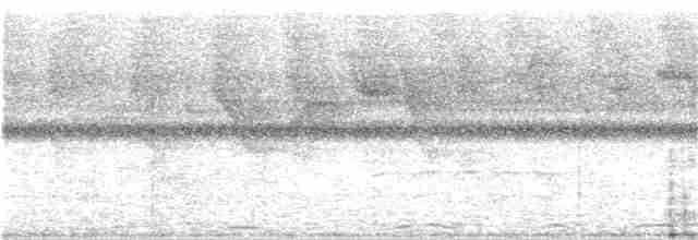Black-throated Trogon
