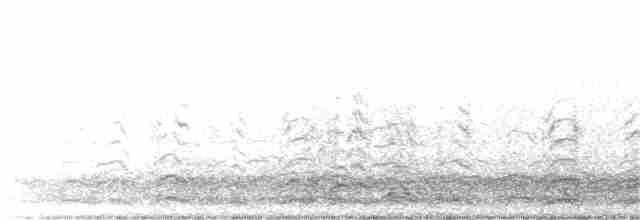 Snow Goose - Lucas Schrader