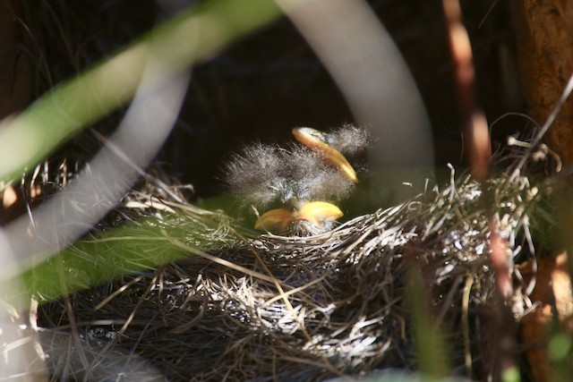 Nest in part sun for the late afternoon.