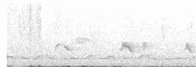 Spotted Wood-Quail - Lucas Corneliussen