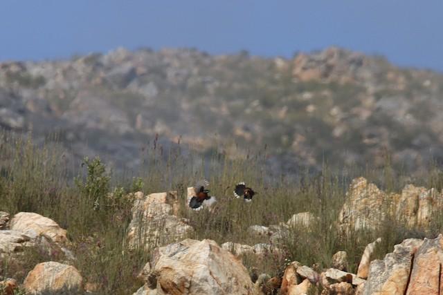 Territory dispute between two males.