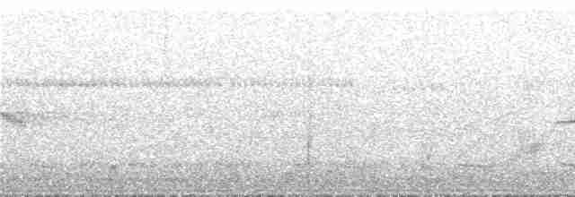 Red-legged Tinamou - Peter Boesman